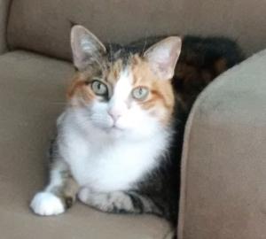 My Bobcat